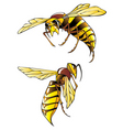 hornets vector image