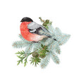 bullfinch winter composition vector image