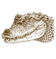 etching crocodile head vector image vector image