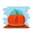 fresh pumpkin healthy food vector image