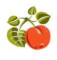 Vegetarian organic food simple ripe orange vector image vector image