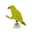 new zealand funny kea eating fruit vector image