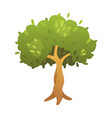 olive tree in cartoon style vector image vector image