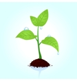 seedling vector image vector image