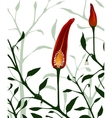 Botanical Red Chilli Pepper Section Plant vector image vector image