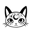 cute cartoon witchcraft decorated cat head vector image vector image