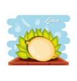 fruit lemon healthy food vector image vector image