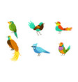 set with different birds with bright colorful vector image vector image