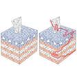ballot box maze vector image