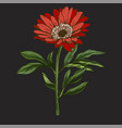 hand drawn red daisy flower with stem and leaves vector image vector image