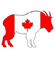 Mountain goat Canada vector image vector image