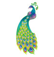 beautiful peacock isolated on white background vector image vector image
