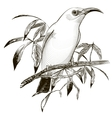 bird Engraving vector image