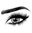 eye with long eyelashes and brows vector image