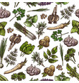 green herbs spices vegetable seasonings pattern vector image