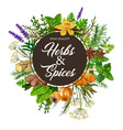 herbs and spices with frame of plants vector image vector image