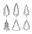 set of conifer trees pine nature design element vector image