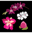 set realistic flowers isolated on black vector image