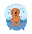 Dog bath color vector image