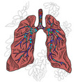 drawing human lung doodle style on white vector image