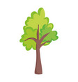 tree greenery foliage nature isolated icon vector image vector image