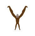 monkey abstract vector image