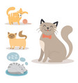 portrait cat animal sleep pet cute kitten purebred vector image