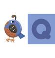 q is for quail letter q quail cute vector image vector image