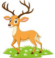 cartoon deer in grass vector image vector image