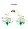 process of cross-pollination using an animal vector image
