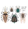 set folk art decorated beetles vector image vector image