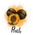 a peach in hand drawn graphics vector image vector image