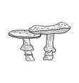 amanita mushroom sketch engraving vector image