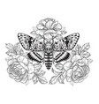 deaths-head hawk moth with roses vector image