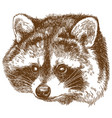 engraving of raccoon head vector image vector image