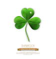 green shamrock on a white background vector image