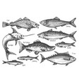 sea fish underwater wildlife ink sketch icon set vector image vector image