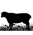 Sheep in the meadow vector image vector image