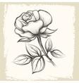 Rose Flower in Vintage Style vector image