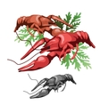 boiled sea crabs with salads food vector image
