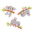 cute koalas character set vector image