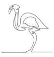 doodle line flamingo vector image