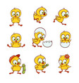 set of cute new-born baby chicken characters vector image