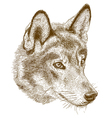 engraving wolf head vector image vector image