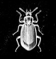 hand drawn darkling beetle mystic entomolog vector image