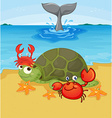 Sea animals on the beach vector image vector image