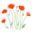set poppy flowers isolated vector image