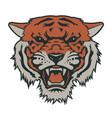 tiger 007 vector image