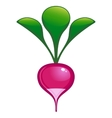 garden radish vector image