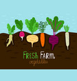vegetables garden growing vector image